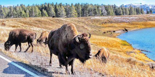 10 dingen die je moet weten over Yellowstone National Park