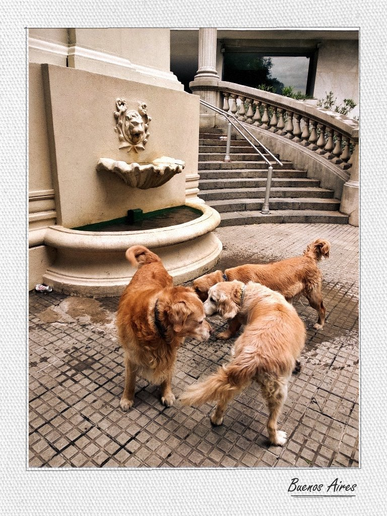 The colors of Argentina: three dogs with golden-brown fur play near a little fountain
