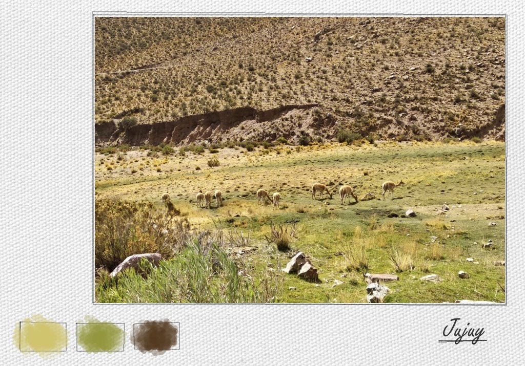 A heard of wild vicuñas blending in to the green-yellow mountainside