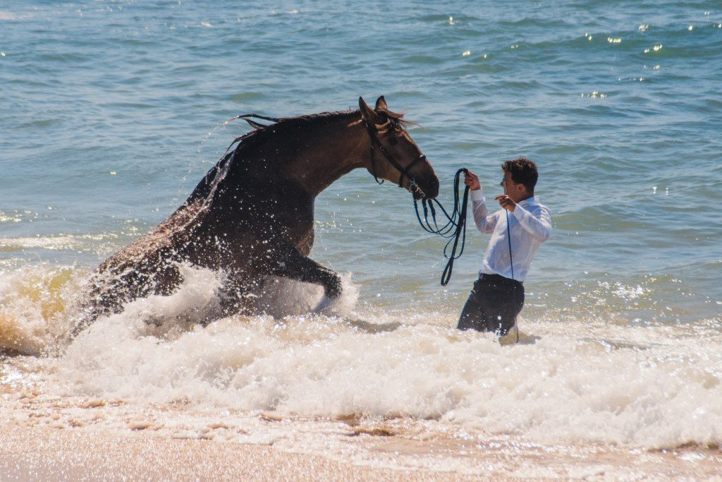 Guapo the Andalusian horse going into the ocean for the first time with his rider
