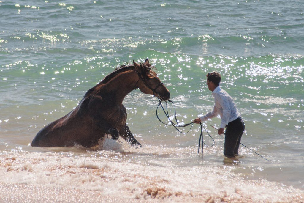 Guapo sits in the ocean as his rider holds his lead rope