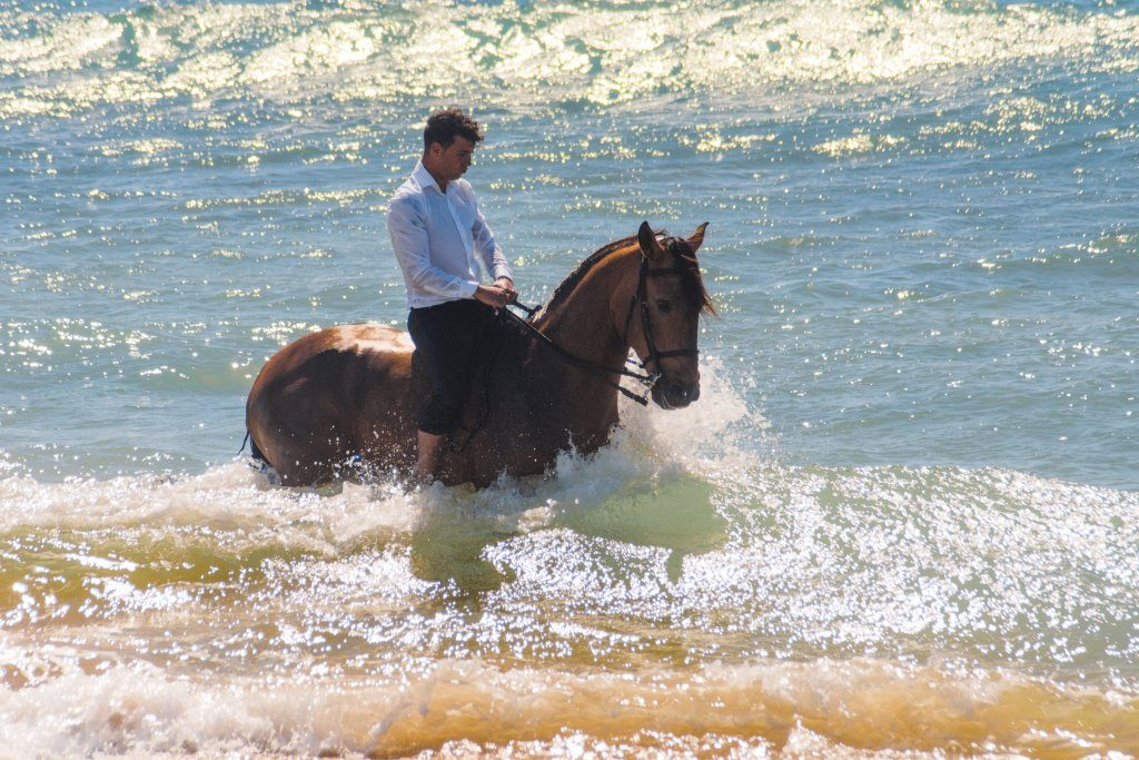 Andalucian horse Guapo takes a few steps into the ocean