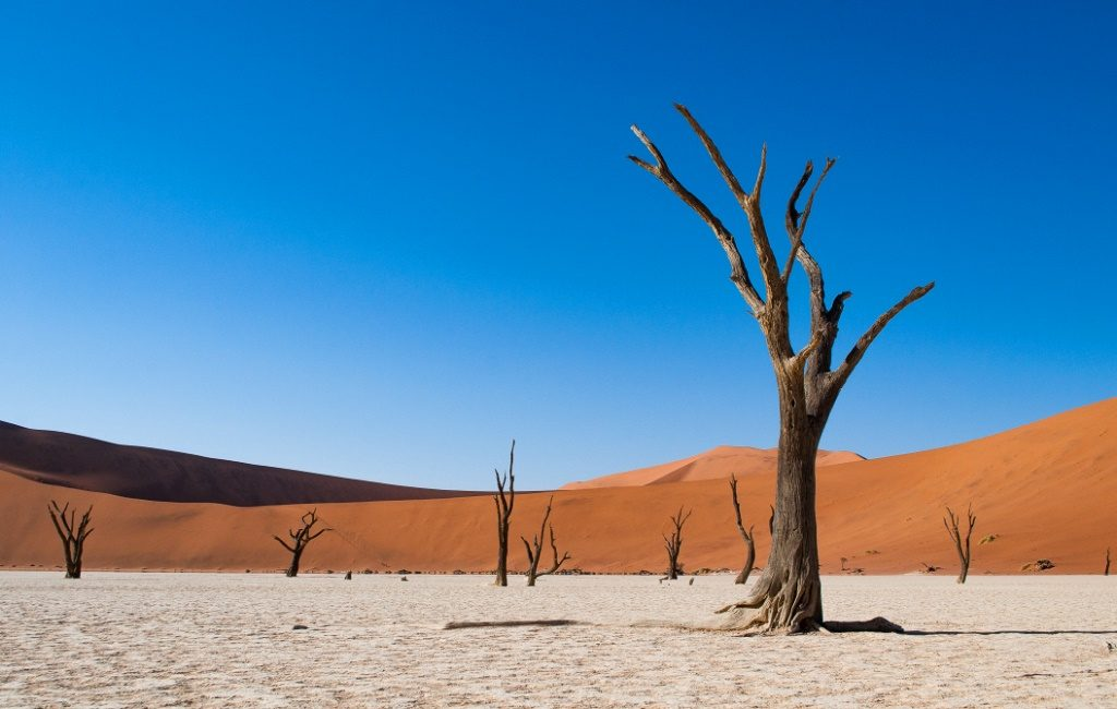 The Deadvlei in Namibia