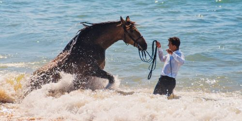 Guapo is an Andalucian horse that experienced his first time going into the ocean