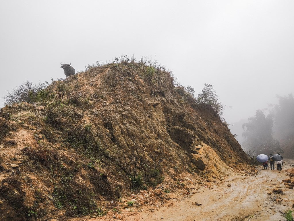 A bull stands atop a hill while a group trekkers with umbrellas pass by below in Vietnam