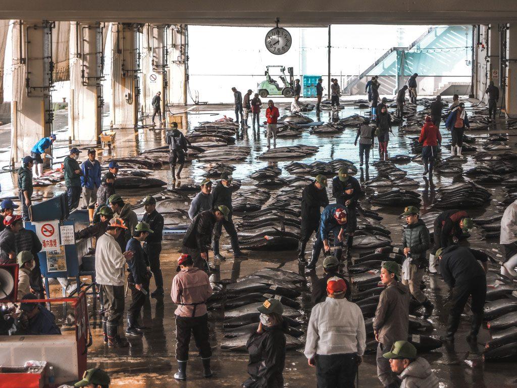 Morning tuna auction proceedings in Wakayama, Japan