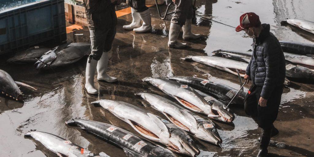 Unsustainable seafood japan: dead tuna at the market in Wakayama