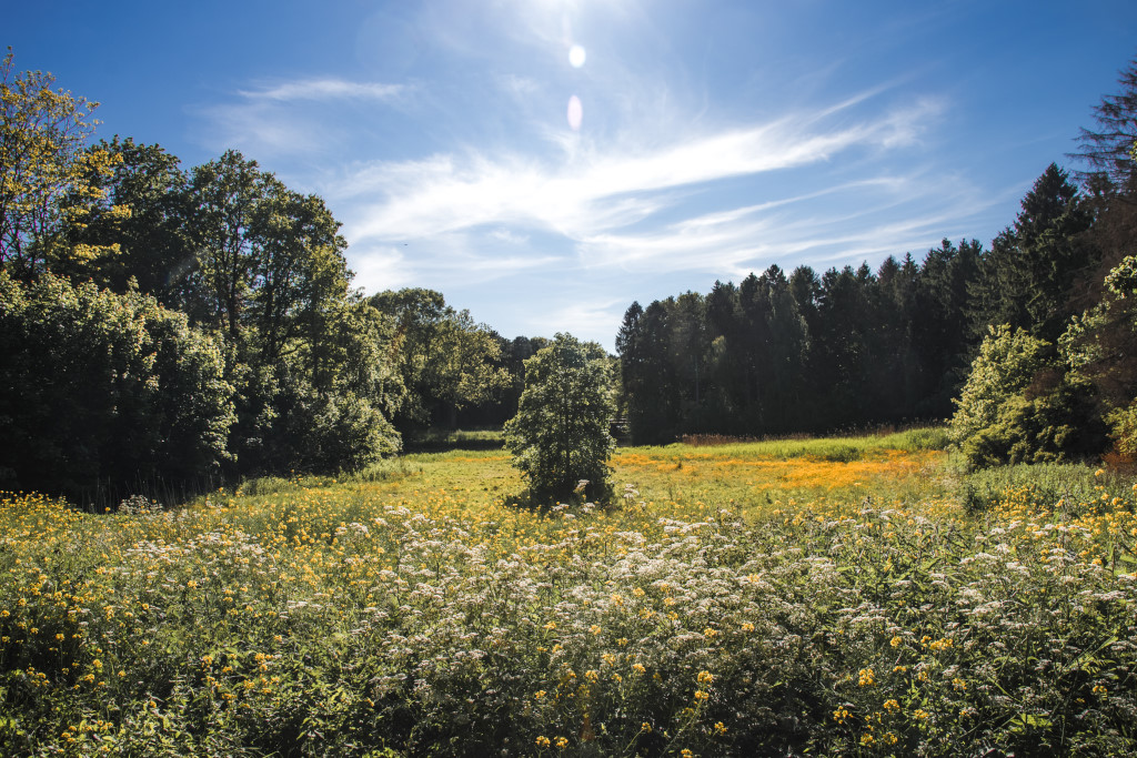 Summer flower field with trees in the Amsterdam Forest